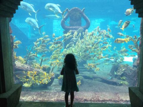 Aquário do Atlantis