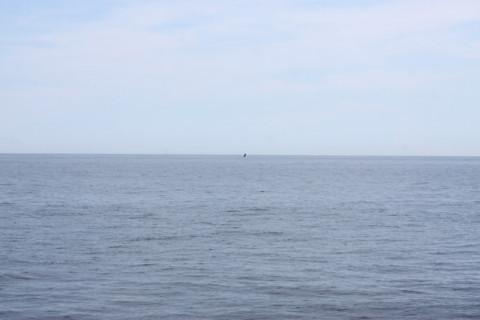 """E depois a baleia """"breeching"""""""