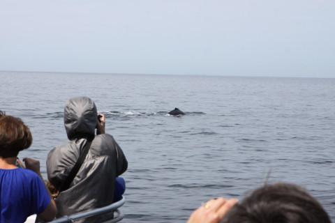 Baleia bem pertinho do barco! E a galera brigando por espaço pra tirar foto