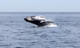 Passeio pra ver as Baleias em Boston
