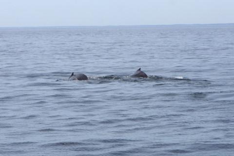 baleiaspertodobarco