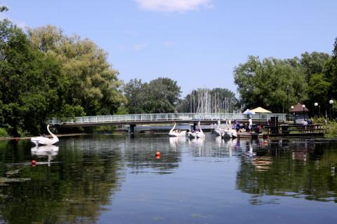 O canal onde ficam os gansos-barco