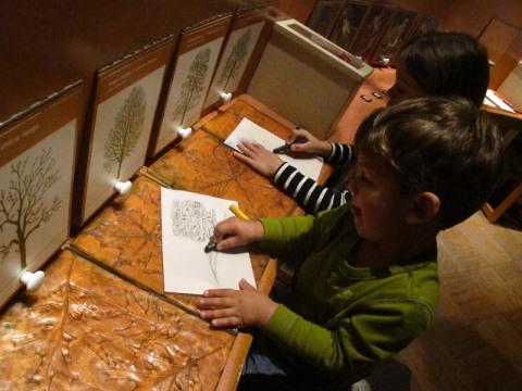 Eric e Julia desenhando e aprendendo sobre árvores e suas folhas