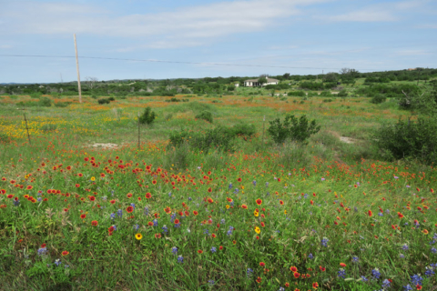 Campos floridos no Hill Country na primavera