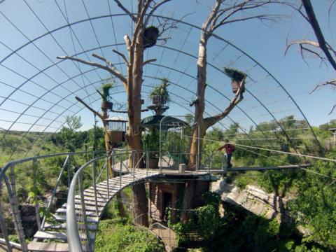 Casa na árvore no Texas: essa é a The Nest, no dia que fomos embora abriu o sol...
