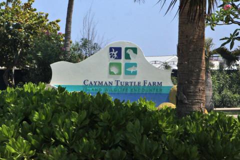 Entrada da Turtle Farm em Grand Cayman