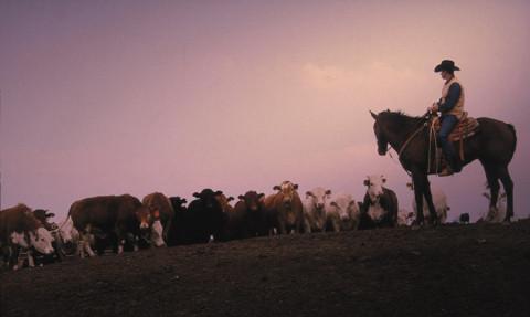 Ainda existem muitos cowboys na ativa no Texas. Foto: Travel Tex