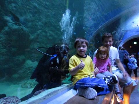 As crianças no túnel do aquário