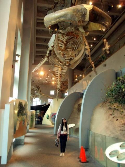 Debora no Museu de Ciências Naturais de Raleigh