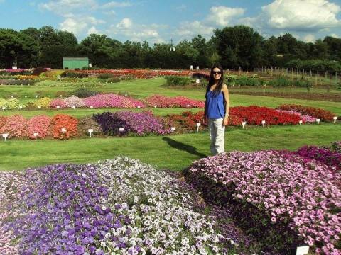 As flores no Jardim Botânico