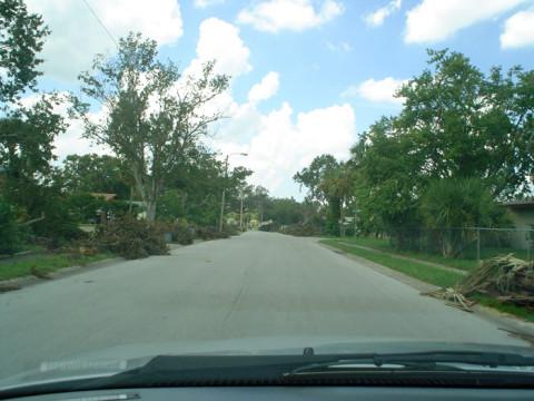 Árvores derrubadas por um furacão