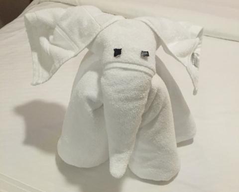 Elefante no primeiro dia