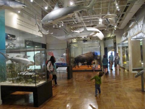 Eric adorou os animais nessa galeria
