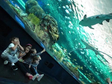 As crianças boquiabertas com o tubarão no Ripley's Aquarium of Canada, em Toronto