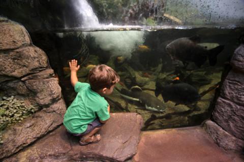 Eric vendo os peixes de rio na área da Floresta Tropical
