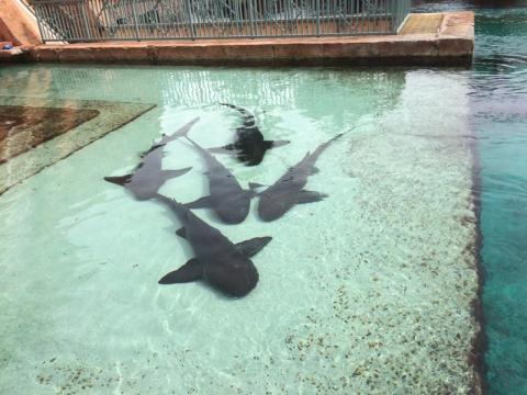 Tanque do escorrega de tubarões