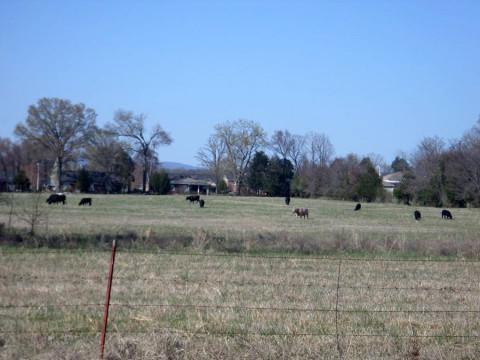 Típica fazenda de gado em Clarksville, Arkansas