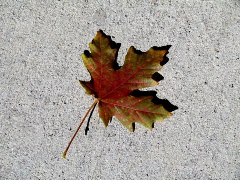 Uma folha colorida pelo outono em Salt Lake City