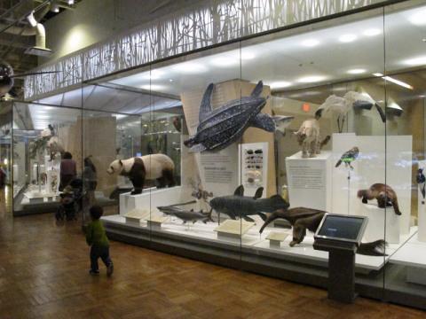 Na galeria da Biodiversidade