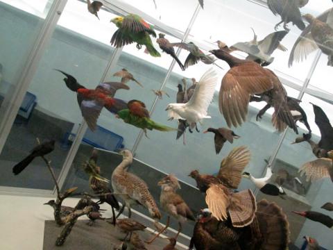 Galeria de pássaros, o Eric  não gostou