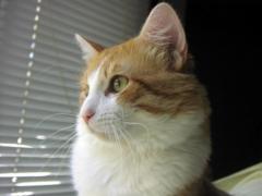 """Gato """"Fofi"""" Misura – 28 de julho de 2003-1 de maio de 2017"""