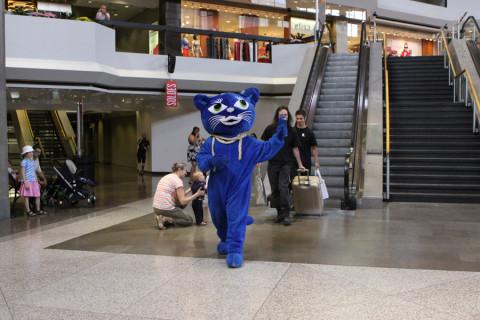 O Gatinho azul é o mascote do Festival