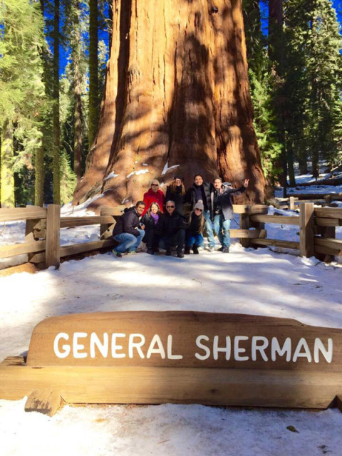 General Sherman, a mais famosa sequóia