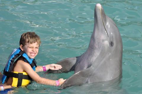 Momento maravilhoso com o golfinho no Dolphin Discovery