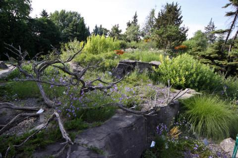 O Jardim Alpino dentro do Jardim Botânico
