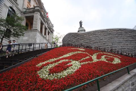Descendo o morro, lindas flores formando o brasão da cidade