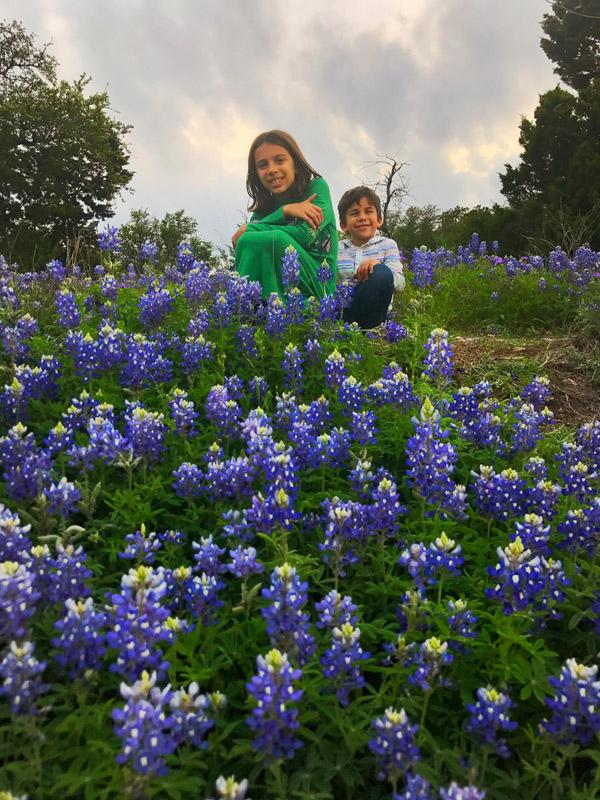 Bluebonnets do Texas