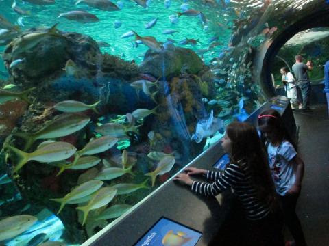Julia e Elena e centenas de peixes