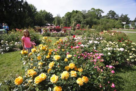 Julia e as rosas do fantástico Jardim de Rosas