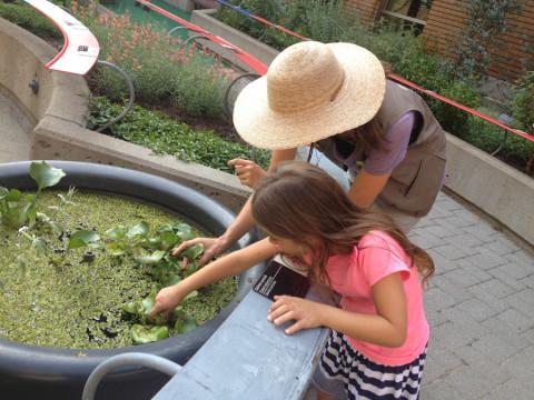 A funcionária do jardim ia explicando e mostrando várias plantas