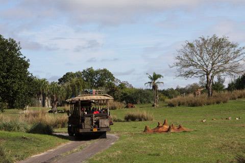 O carro que estava na nossa frente no Kilimanjaro Safaris