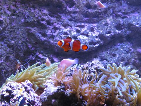 As crianças adoram o Nemo (peixe palhaço)