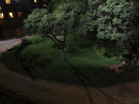 Girafas sentadinhas pra dormir, vistas da minha varanda