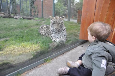 Matheus adorou o Zoo de Budapeste