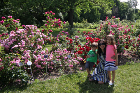 Tivemos que fazer pose no jardim de rosas