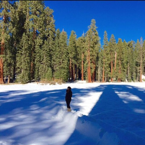 Neve no Sequoias National Park