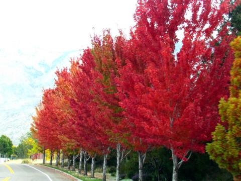 As árvores lindas no outono