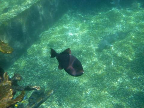 Peixe e tubarão nadando com o Gabe