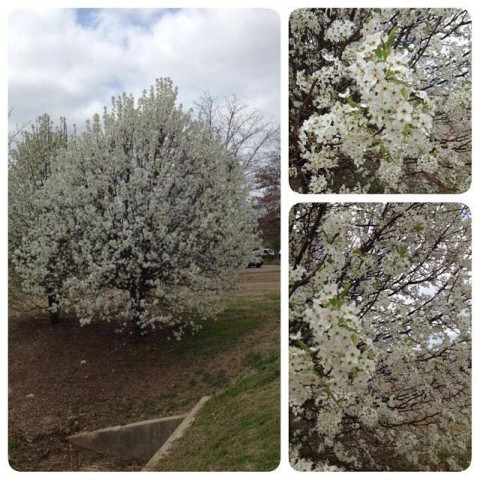 Primavera em Madison