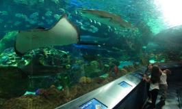 Ripley's Aquarium of Canada, o aquário de Toronto