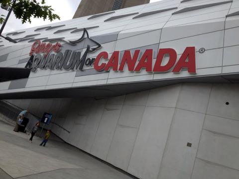 Chegando no Ripley's Aquarium of Canada, em Toronto