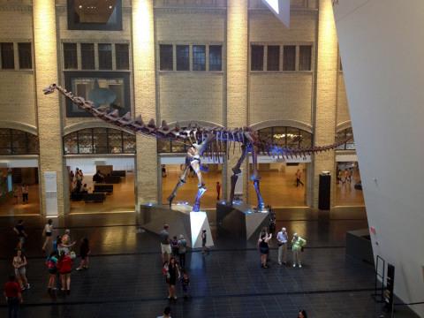 Logo na entrada você dá de cara com esse fóssil gigantesco