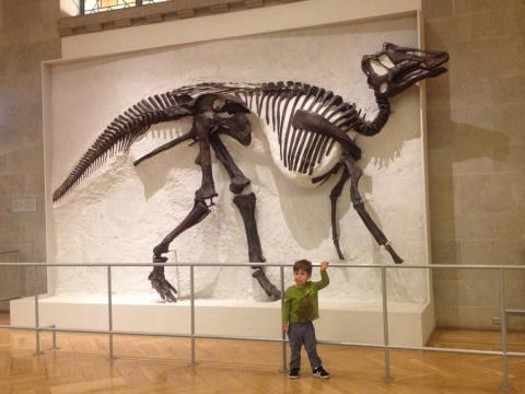 romericfossil
