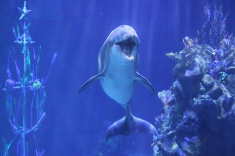 Um dos golfinhos posando para fotos no Sea Base