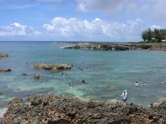 sharkscovenorthshore