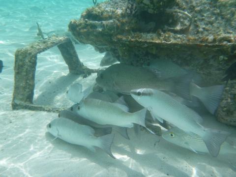 snorkelingcastawaycay
